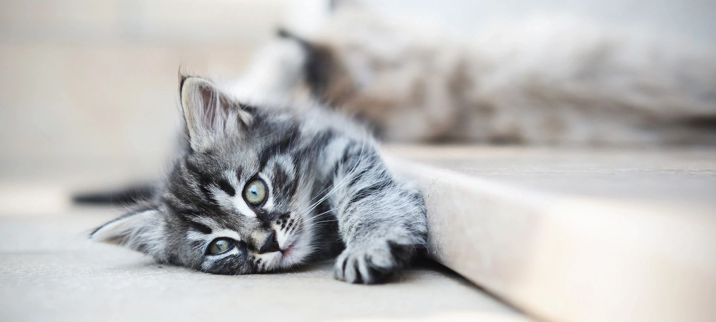 Reliable, professional cat sitters twodogspetservices.com
