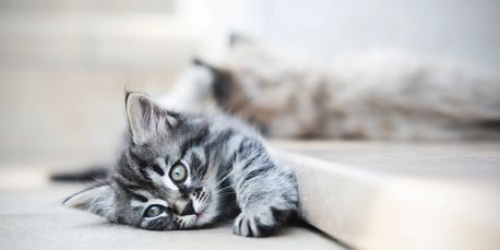 Do you know when your cat is sick? Do you know what constitutes an emergency? Let ZenCat help.