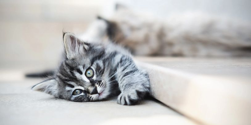 Kitten laying on side stretched out in contentment