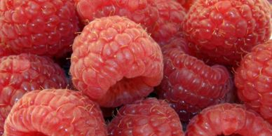 When should I prune by raspberries?