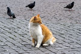 Cat and pigeons in a plaza