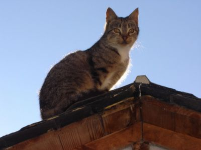 Cat on a rooftop