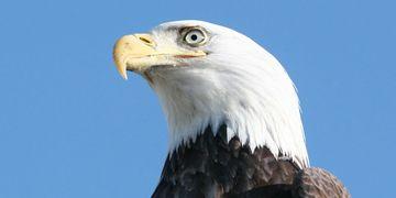 Birds Of Prey Wildlife In Need Emergency Response Of Pennsylvania