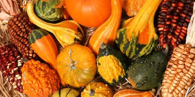 Assorted autumn gourds