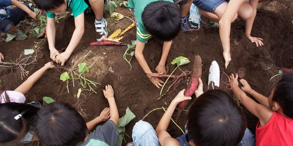 children planing in soil
