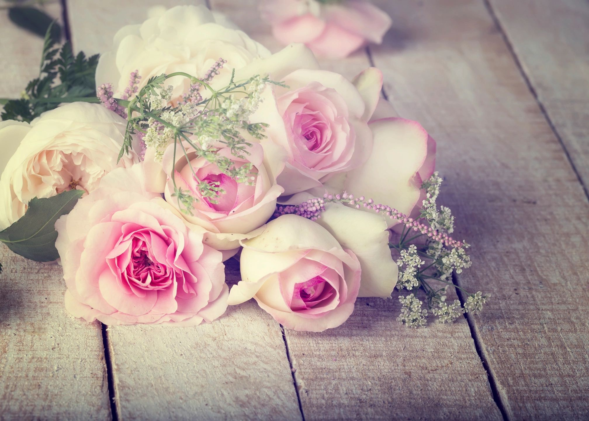 Roses pink florist
