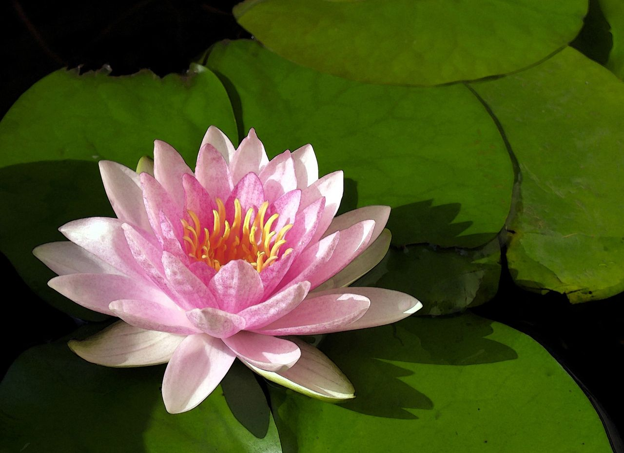 Vastu Plants At Home Plants With Positive Energy