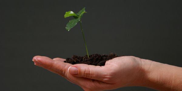 A hand holding a pile of dirt with a little plant growing in it.
