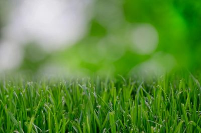 stock image of grass