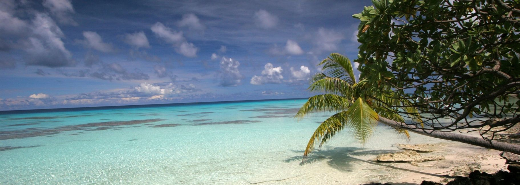 Beach with clear blue water and overhanging palm tree.