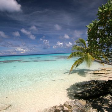Tropical beach with shallow water and coral reefs and palm trees