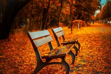 Autumn Leaves on Benches Along Side Walk in Fall