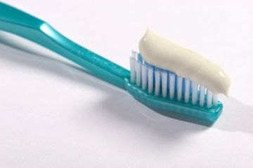 Toothbrush with toothpaste that is used on a dog.