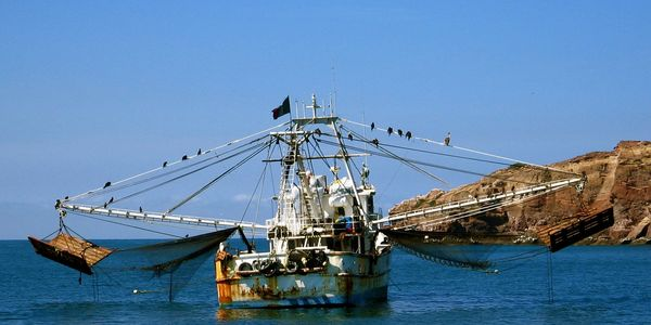 Tampa Bay Fisheries, Seafood Sourcing