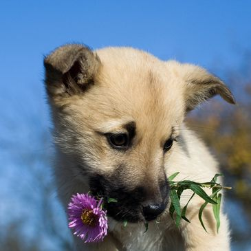 Puppy with a flower.
