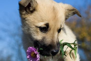 Puppy with flower in his mouth