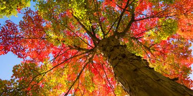 Fall Trees Room Roll
