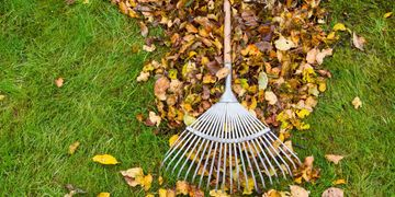 fall spring leaves landscape clean rake blow debris michigan romeo trees plants maintenance annuals