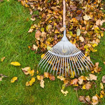 yard clean up murrieta temecula
