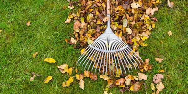 Leaves being gathered by a rake