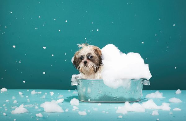 DIY Dog Wash on site, Clean Bath, we supply soap and towels.