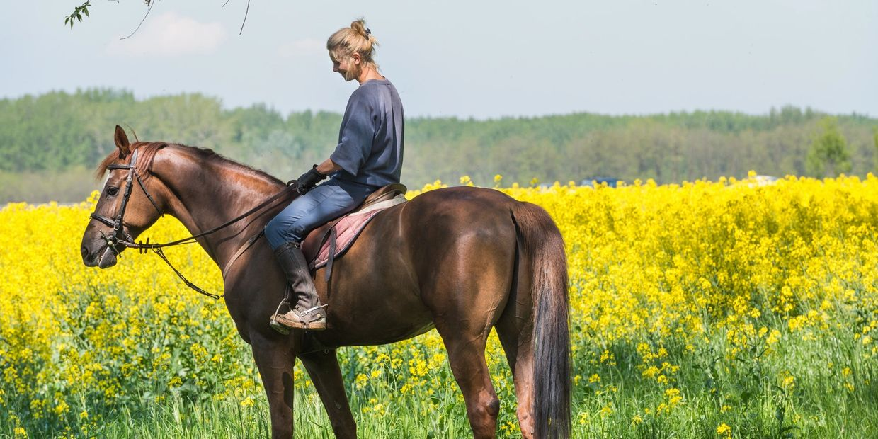 Horseback Riding Vacations Ohio