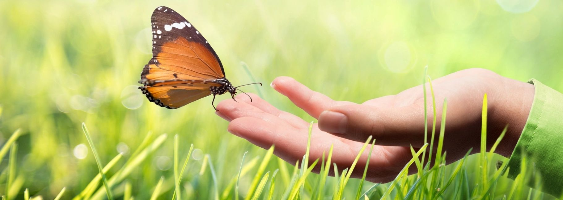 butterfly sitting on an outstretched hand