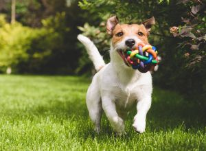 Essential pet llc large selection of pet food treats toys and supplies solutioingenieria Choice Image