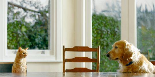 Pet Sitter in Lakeland - Blue Ribbon Pet Sittin