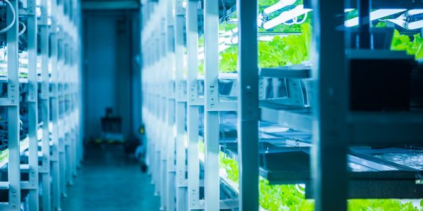 hydroponics, indoor hydroponics, growing hydroponics, hydroponics suppliers, hydroponics supplies, hydroponics new technology, hydroponics dealers, hydroponics cbd oil, hydroponics cbd flower, hydroponics wholesaler, hydroponics registered dealer, hydroponics hemp oil