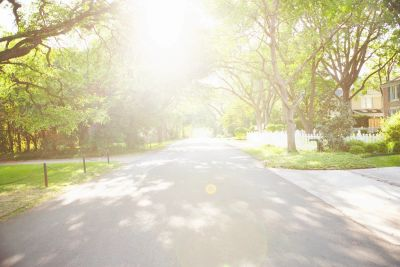 Tree-lined community road with  sunshine shining down on it