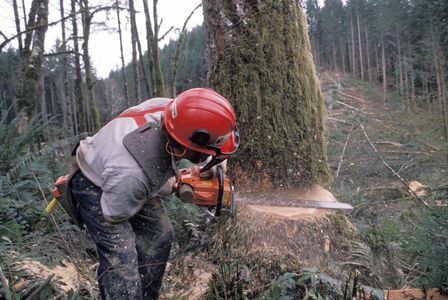 We provide full Tree Services from single trees to entire land clearing
