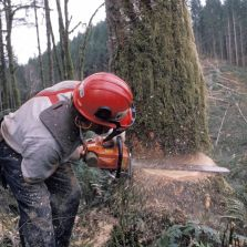 stump removal and stump grinding