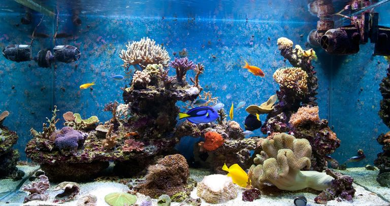 Salt water reef aquarium fish tank Liverock coral fish
