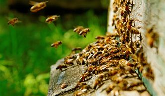 Bees are very important and very hard working insects but we understand that having them around your