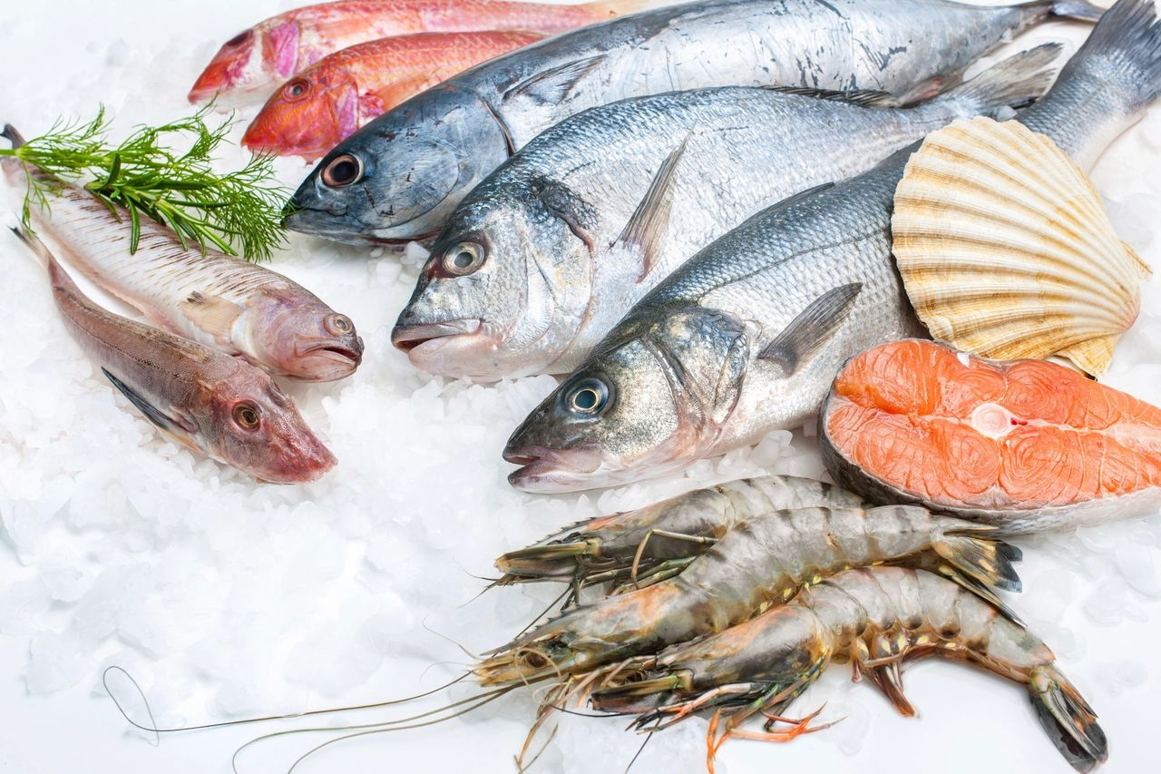 Fish oil VS Phytoplankton