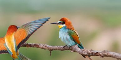 bird watching holidays Spain, bird watching holidays abroad, birding holidays, ebro delta birding