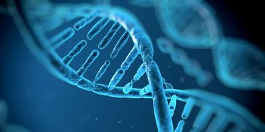 Some of the best weight loss tips are in your genes. Get the best nutritional DNA testing.