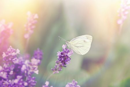 white butterfly on purple flower
