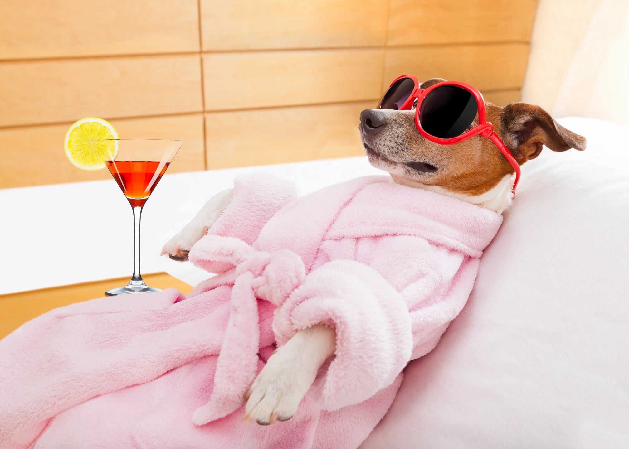 Dog lounging at the spa in robe and sunglasses