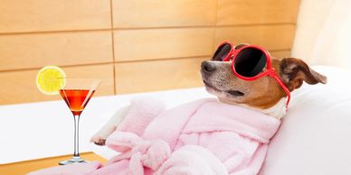 dog with sunglasses, robe and drink relaxing