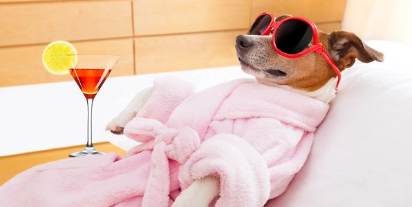 Luxury Spa Treatment for dogs at Z Pet Hotel & Spa