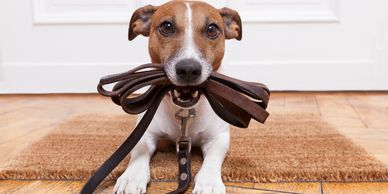 pet safety, pet grooming, pet muzzle