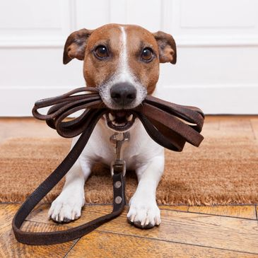 Obedience classes, sign up, register, dog training, good dog, bad dog, puppy classes, train my puppy