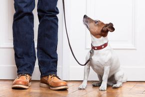 dog training dog obedience dog staying puppy training leash training