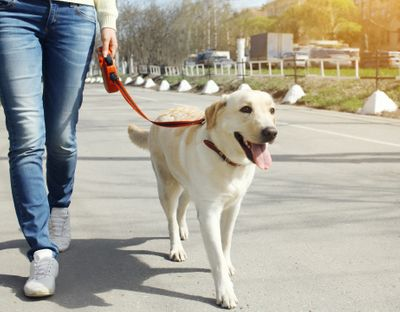 leash training page