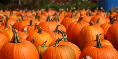We have a variety of carving pumpkins at Bennett Farms!