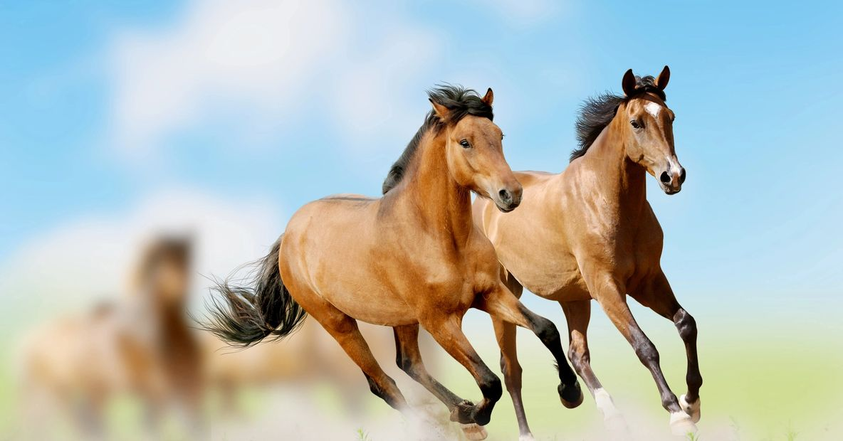 Wild horses couldn't drag you away!