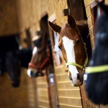 Horses in stall. JM4 Ranch offers Horse and owner Boarding Bed and Breakfast Services,