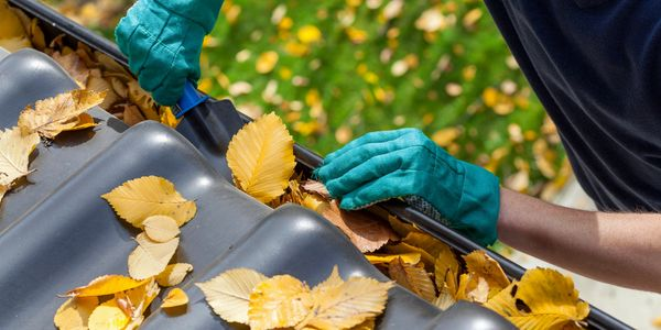 gutter cleaning and roof cleaning services